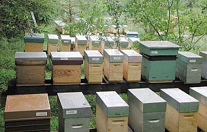 apiculteur france