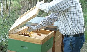 Traitement du varroa à l'acide formique