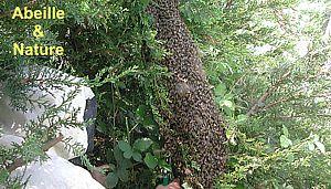 comment trouver un essaim d abeille. Black Bedroom Furniture Sets. Home Design Ideas