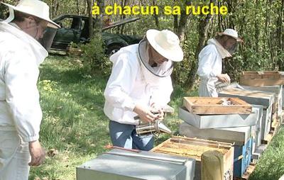 apiculteur revenu