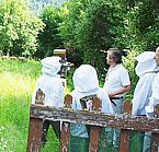 Stages de Formation en Apiculture & reconversion professionnelle