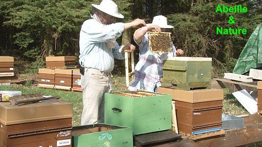 nous respectons nos abeilles avant tout nous prenons le temps de nous en occuper et en retour. Black Bedroom Furniture Sets. Home Design Ideas