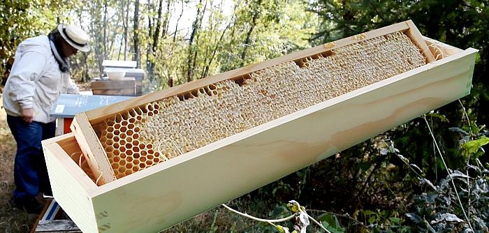 go tez et vous comprendrez ce qu 39 est un miel pur. Black Bedroom Furniture Sets. Home Design Ideas