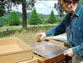 élever les abeilles