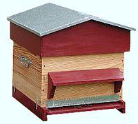 cadre de ruche contenant des cellules royales. Black Bedroom Furniture Sets. Home Design Ideas