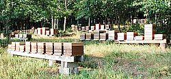 ruches a vendre