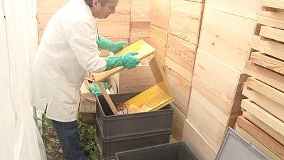 Trempage d 39 un corps de ruche dans un bac d 39 huile de lin froid - Terebenthine huile de lin ...